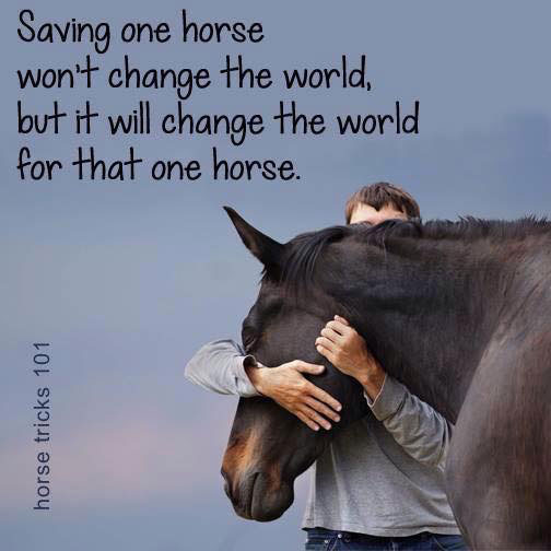 save one horse